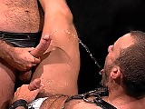 Muscle hairy men in a pissing and fucking action